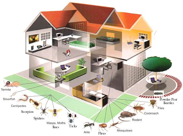 Image - structural pest control